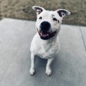 Image of dog - Charlotte is available for adoption at West-MEC Northwest Campus