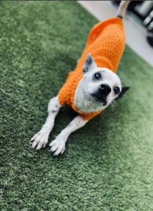 Image of dog - Mr. Big is available for adoption at West-MEC Northwest Campus